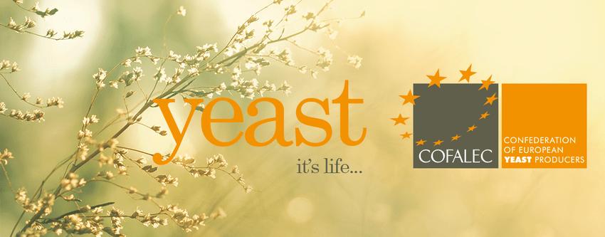 What Fresh Yeast Definition