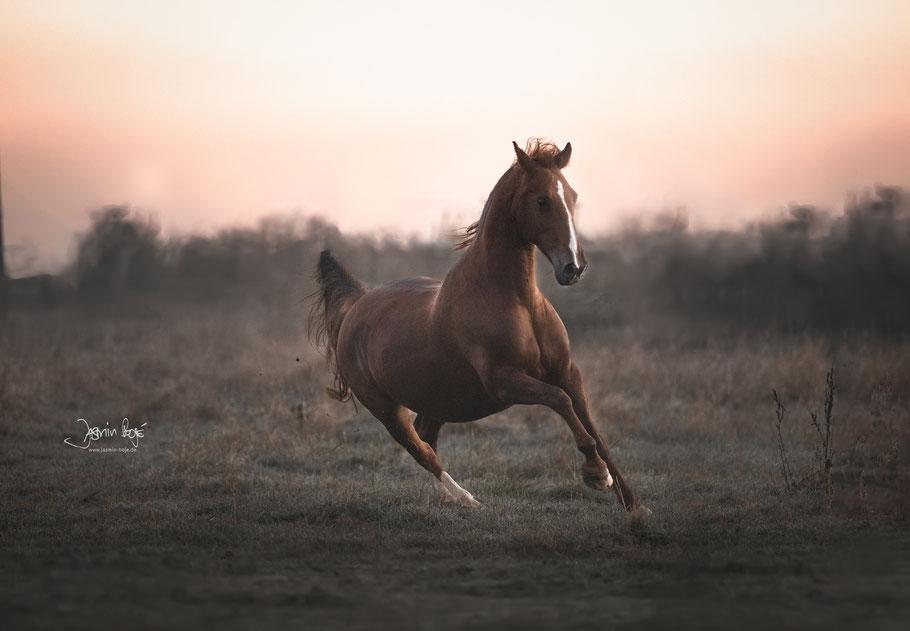 Pferde und Menschen  jasminbaranowskis Webseite