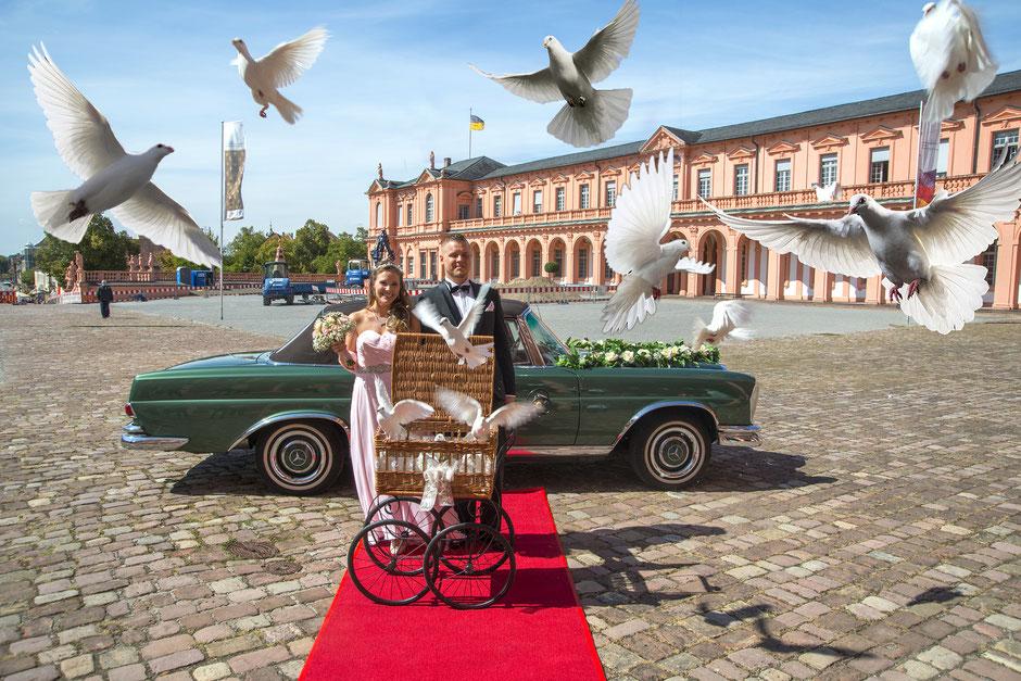 Fotos Hochzeit Hochzeitsfotograf Rastatt BadenBaden Gaggenau Ettlingen  HochzeitsFotografRastatt