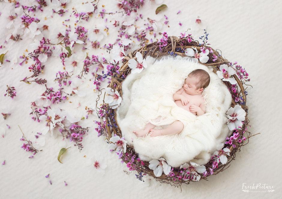 Newborn Baby Fotografie  Freshpicture Photography