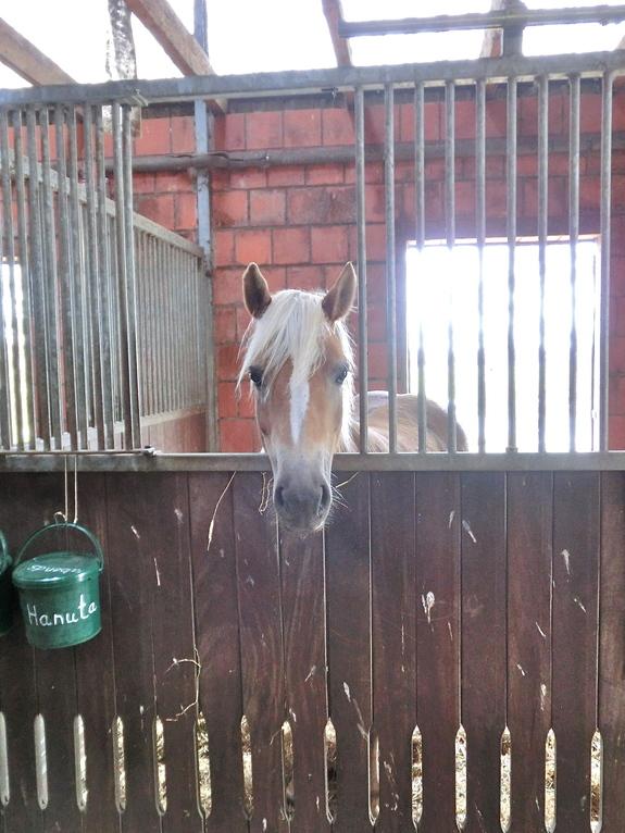 Pferdeboxen  Hof Wellenreiter Ferienwohnung an der Nordsee in Cuxhaven Duhnen Wattwagen