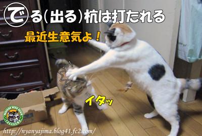 """写真は""""http://nyanyajima.blog41.fc2.com/blog-entry-1767.html""""より拝借しました。"""