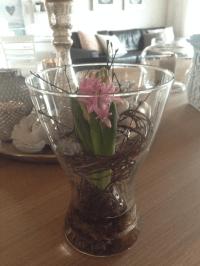 Blumenzwiebeln Im Glas. diy muttertagsgeschenke daumenkino