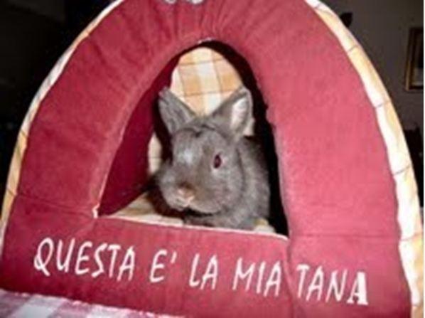 Foto cuccioli adottati 2013  CASA FABRI Allevamento e vendita conigli ariete nano e nani colorati