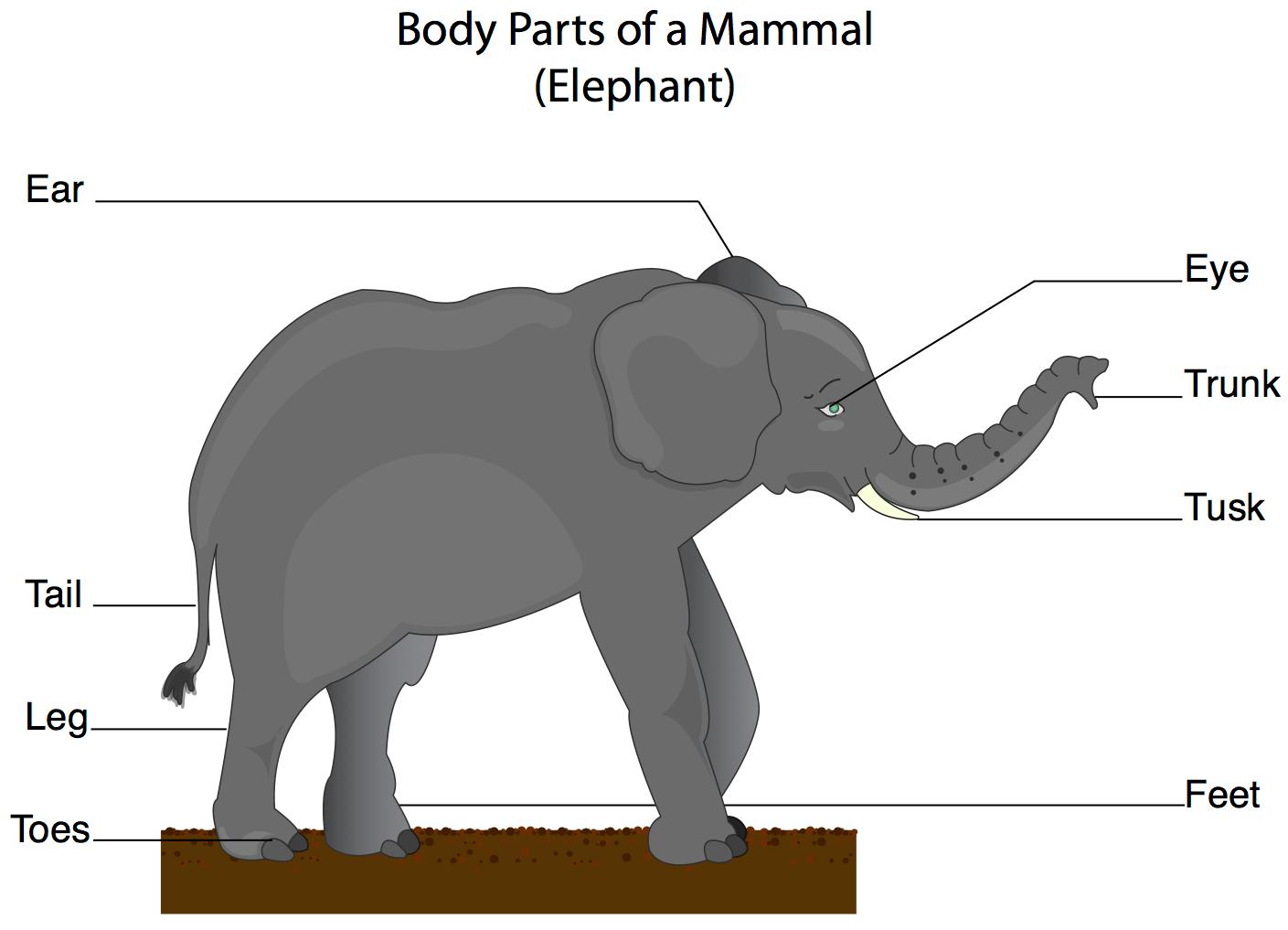 rat digestive system diagram quiz 2003 toyota tacoma wiring mammals página web de aiclepuntadenamer