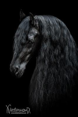 Pferde  Pferdefotografie Hundefotografie Fotografie