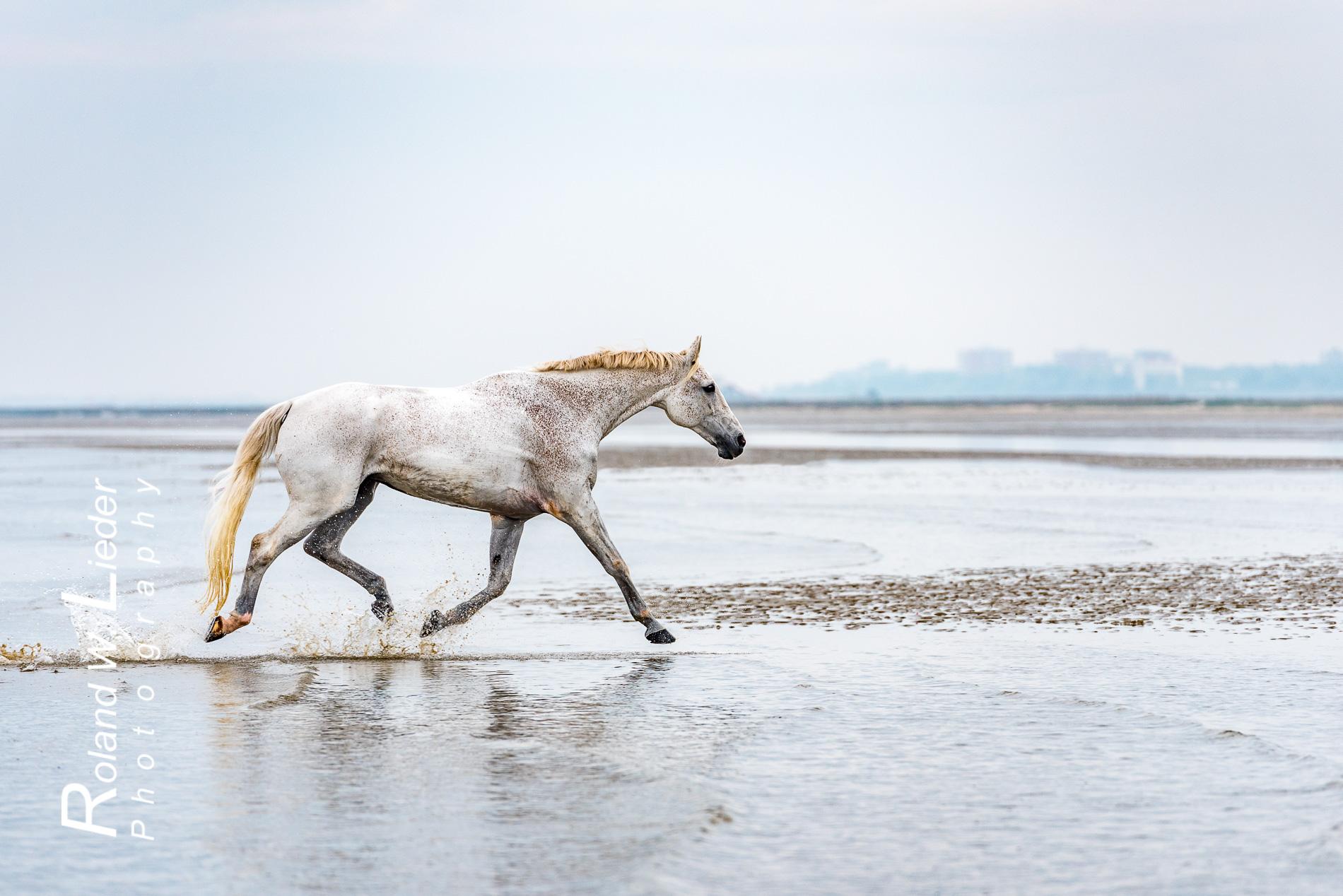 Pferde  Fotoreisen