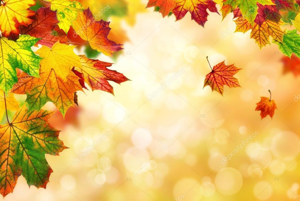 Fall Leaves Wallpaper Powerpoint Background Візитка навчального закладу Полтавська ЗОШ І ІІ ступенів №15