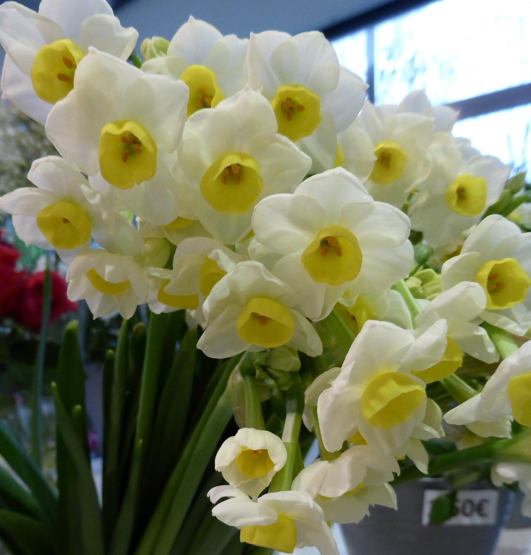Blumenladen Blumeneck NEU in Ingolstadt  blumeneck1s Webseite