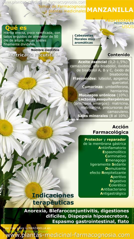 10 Beneficios de la manzanilla y algún que otro punto negativo