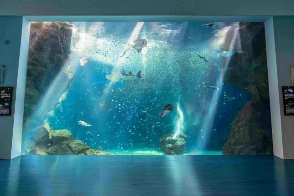 【桃園Xpark水族館】門票怎麼買,交通資訊,展場資訊,周邊景點看這裡  FunTime旅遊比價