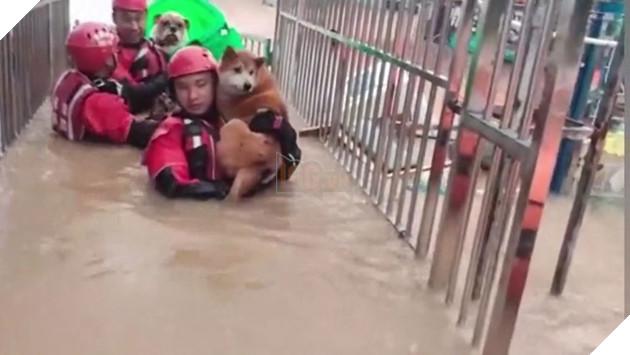 Các anh lính cứu hỏa nhanh chóng ứng cứu bệnh viện thú y nơi có nhiều thú cưng điều trị. (Ảnh: Cắt từ clip).
