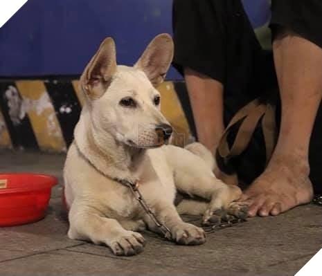 """Cậu bé ôm cún cưng co ro giữa đêm giao thừa trên phố Nguyễn Huệ:""""em ước có một mái nhà che nắng mưa 2"""