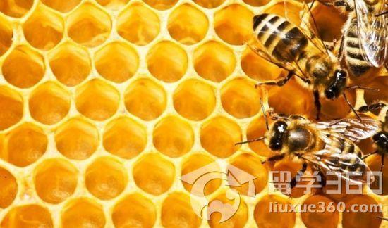 英國蜂蜜制品大盤點 - 特產推薦 - 立思辰留學
