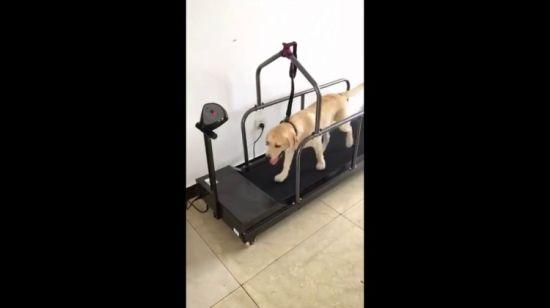 chine tapis de course de formation pet
