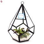 Plant Care Supplies Soil Accessories Six Surface Diamond Glass Geometric Terrarium Tabletop Succulent Plant Terrarium Kisetsu System Co Jp