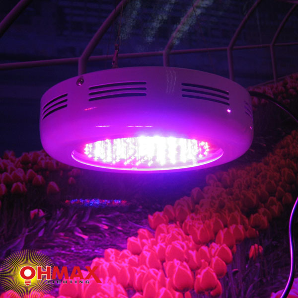 China 901W UFO LED Grow Light  China Ufo Grow Light