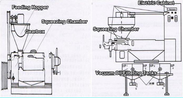 Macchina automatica della pressa di olio della