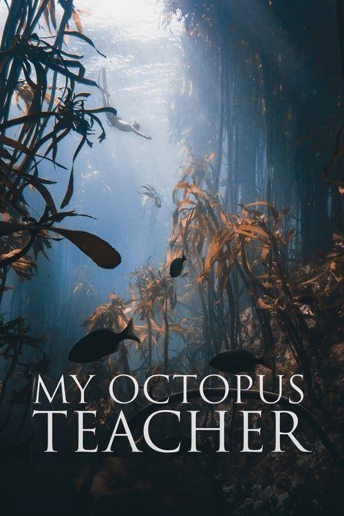 Key visual ofMy Octopus Teacher