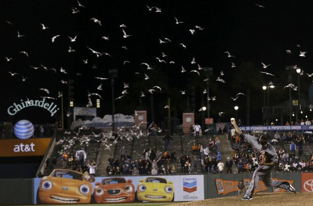 Watch Seagulls Descend On San Francisco Giants Game