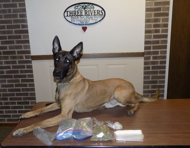K9 bust Three Rivers