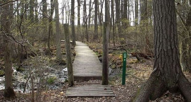 Trails at Yankee Springs Recreation Area beckon hikers