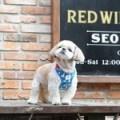 Its Dog(イッツドッグ) スイミングダックハーネス/ブルー【L】