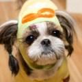 Its Dog(イッツドッグ) コスプレ帽子/ポロロ【M】