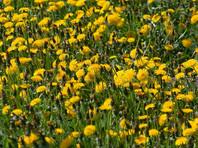 Правонарушение заключается как в действии, например, использовании семян, зараженных болезнями, так и в бездействии - когда дачник не уничтожает сорняки механическим путем или с помощью химикатов