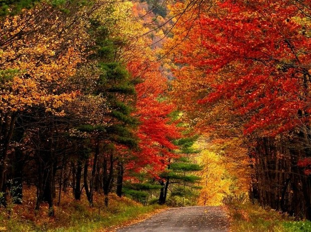 Upstate New York Fall Hd Wallpaper 5 Scenic Drives In The Catskills To Take During Fall