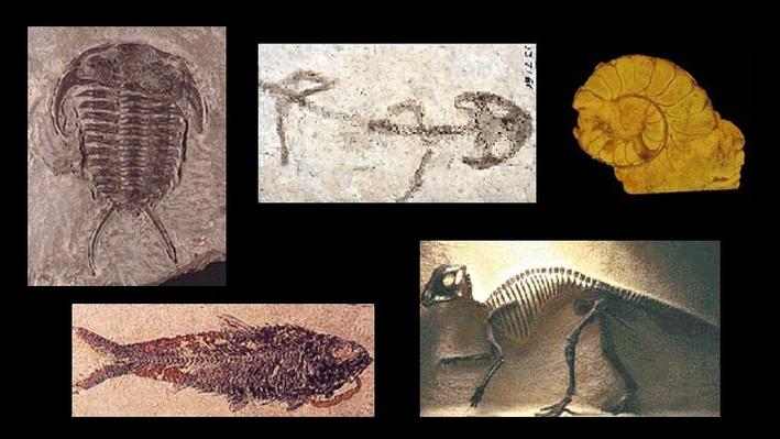 Types Of Fossils Science Interactive PBS LearningMedia