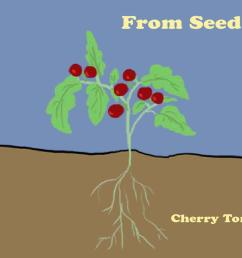 From Seed to Fruit   Everyday Learning   PBS LearningMedia [ 1080 x 1920 Pixel ]