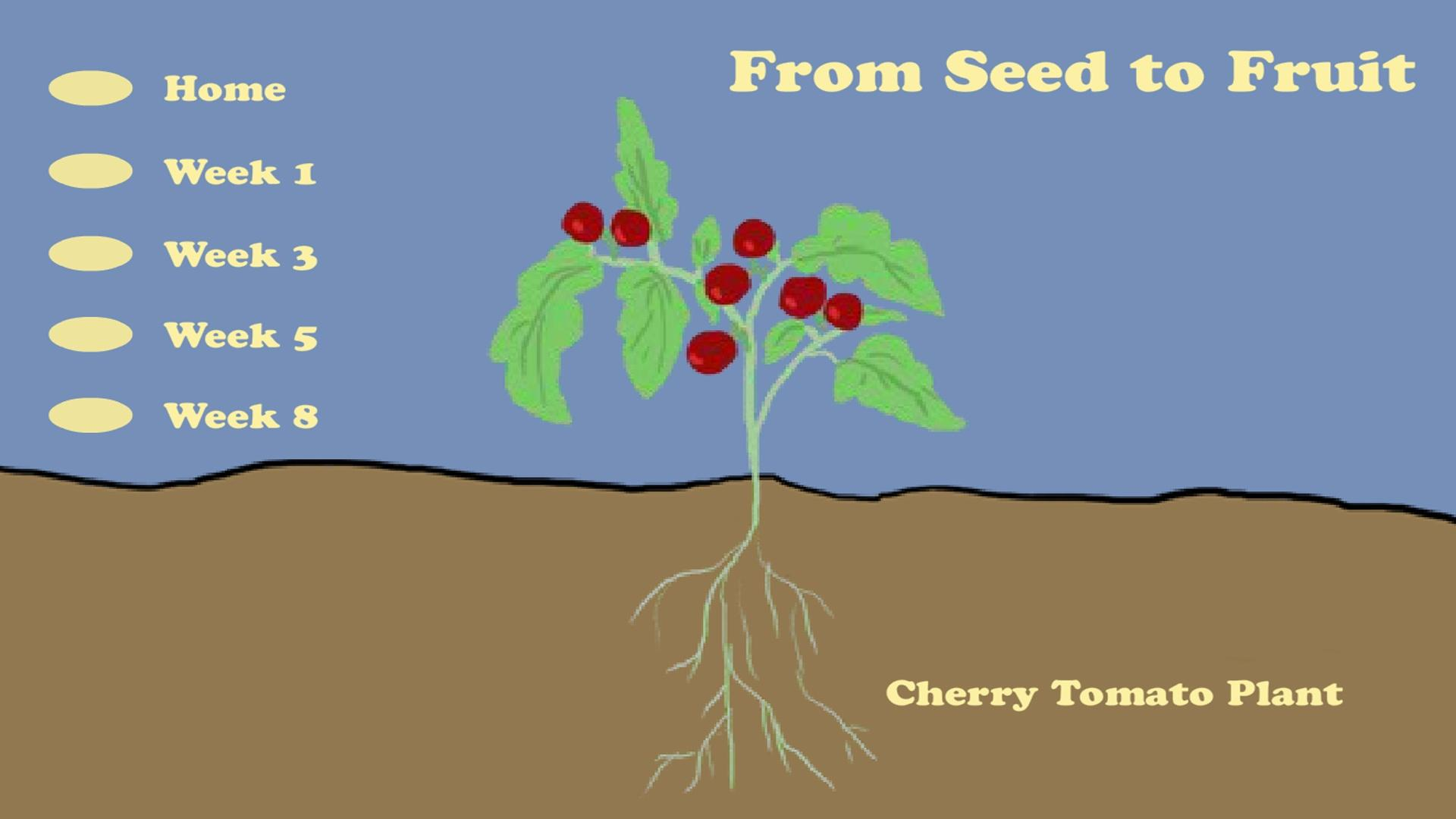 hight resolution of From Seed to Fruit   Everyday Learning   PBS LearningMedia