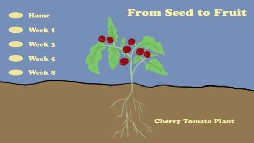 small resolution of From Seed to Fruit   Everyday Learning   PBS LearningMedia