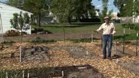 Video: Growing Food and Cleaning a Pond | Watch Backyard ...