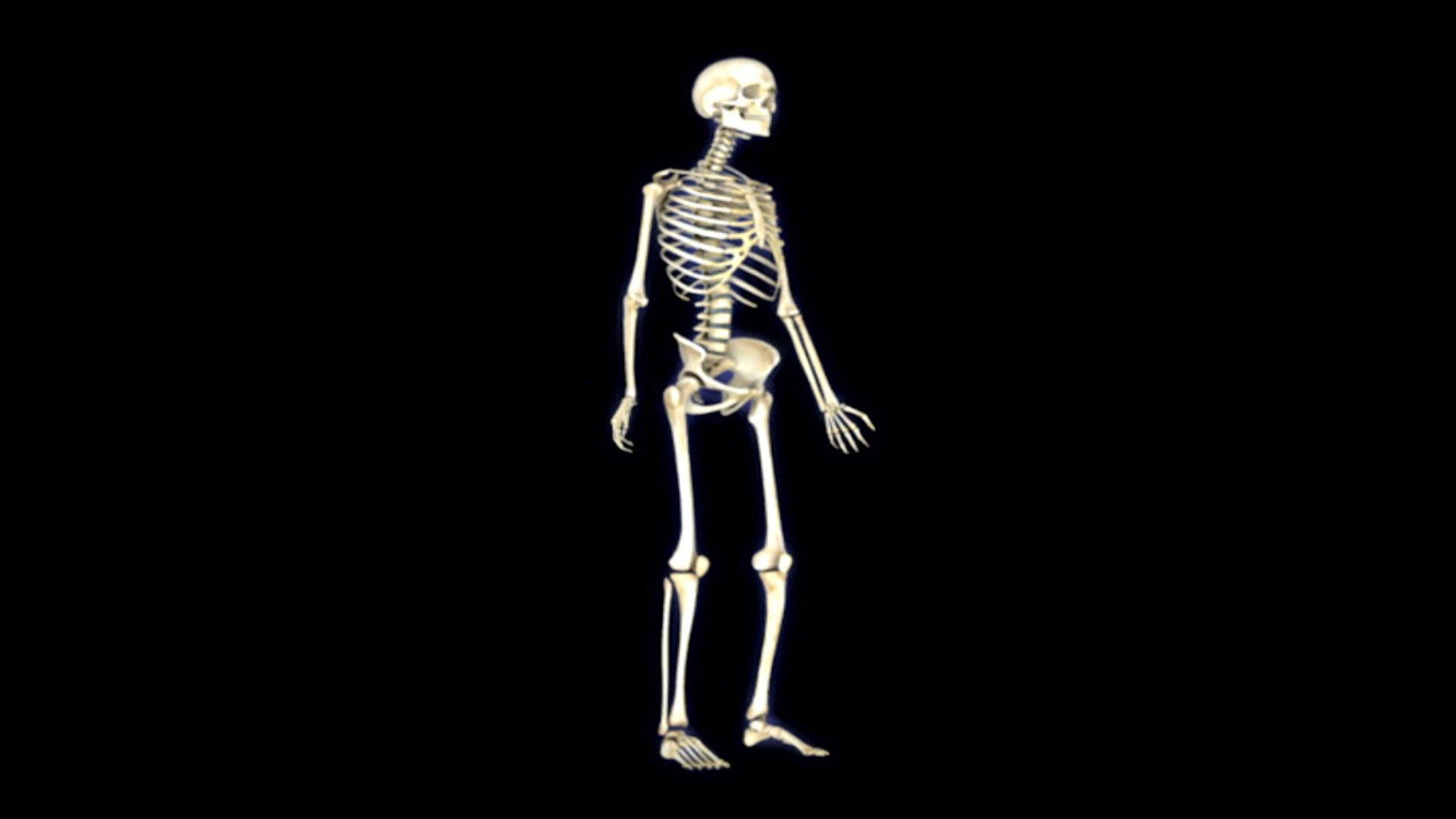 Bestseller Body Trek Anatomy Physiology Answers