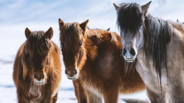 Equus Story Of The Horse Episode 2 Chasing The Wind