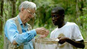 Image of A Closer Look at E.O. Wilson – Of Ants and Men