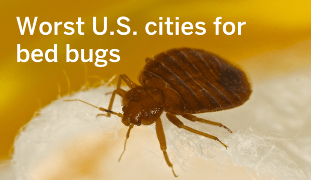 Dont Want The Bed Bugs To Bite Avoid These US Cities