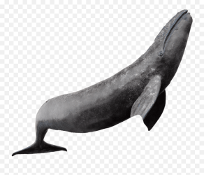 Whale Photos Png Transparent Background Whale Png free transparent png images pngaaa com