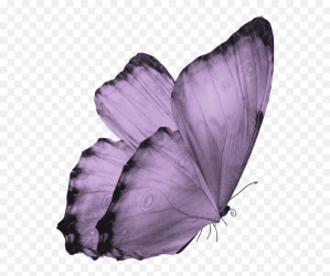 Transparent Background Translucent Butterfly Clipart Transparent Background Butterfly Png free transparent png images pngaaa com