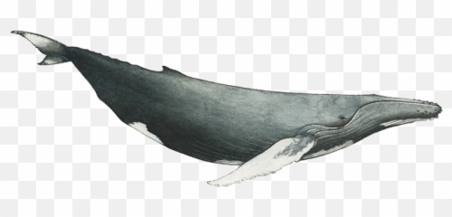 Free transparent humpback whale png images page 1 pngaaa com