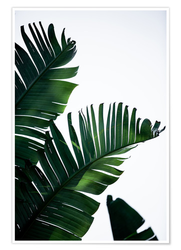 Palm Leaves 16 Posters and Prints  Posterloungecom