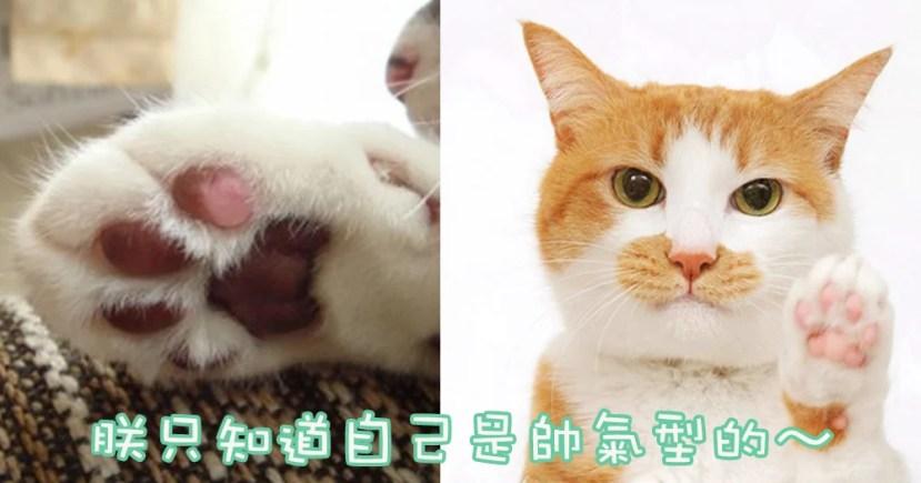 喵星人也有掌相?超神準⋯5種貓貓肉球個性分析! | CatCity 貓奴日常