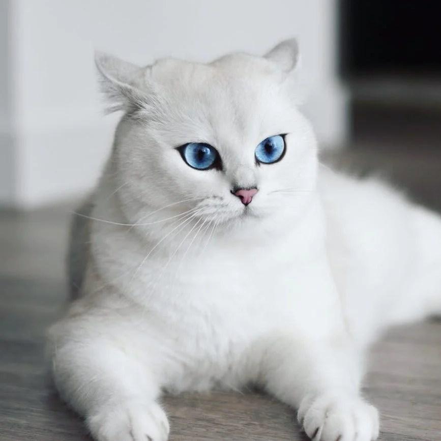 這根本是網美臉!天生擁有深邃眼線+迷人藍眼睛貓咪Coby,像女生一樣美的小男生~   CatCity 貓奴日常