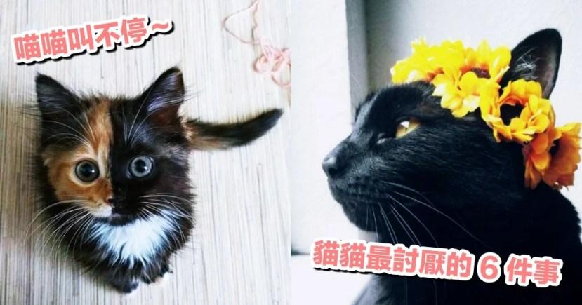 為什麼會一直喵喵叫?別不小心踩到地雷,因為貓貓最討厭這 6 件事! | CatCity 貓奴日常