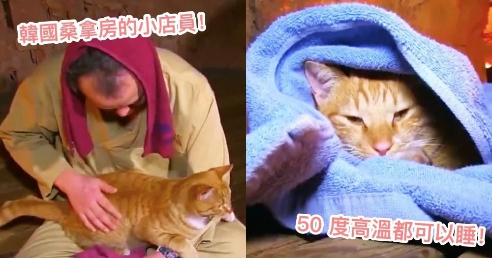 來spa還有貓陪坐!韓國橘貓最愛把『桑拿房』當睡窩,50 度高溫也照樣呼呼大睡!網:立刻揪團去~ | CatCity 貓 ...