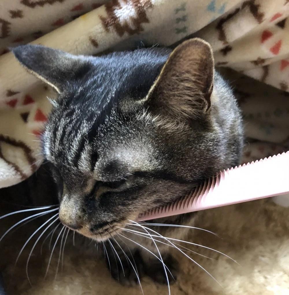 【厭世臉掰掰】日推特「貓毛梳」還原「倒刺」,讓臭臉貓也能爽翻天! | CatCity 貓奴日常