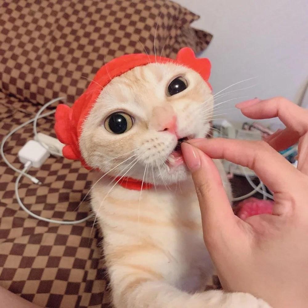 【萌貓】根本吃可愛長大 超可愛橘貓「浮誇系睜眼」表情好驚訝 | CatCity 貓奴日常