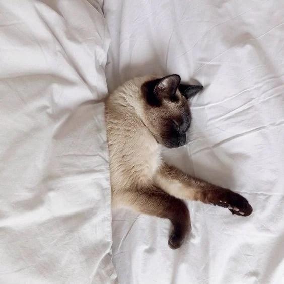【新手養貓】貓咪耳朵清潔正確方法 日常清潔3大要點要注意 | CatCity 貓奴日常